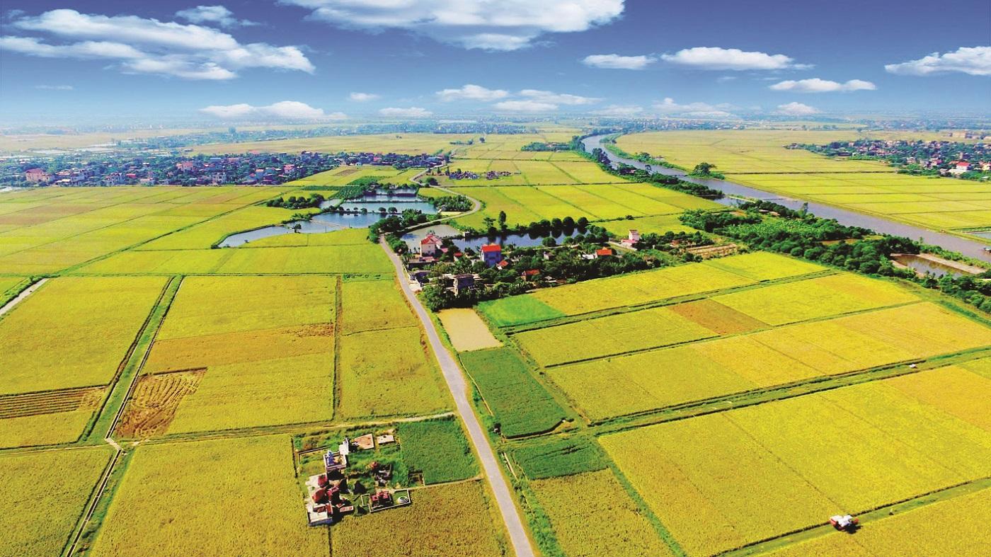 Các dự án nông nghiệp